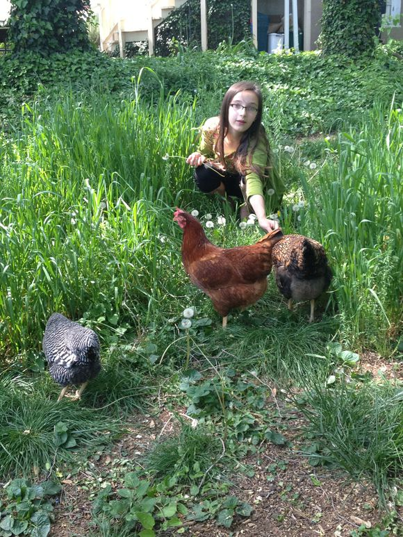 My chicken whisperer